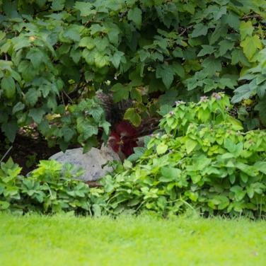I busken