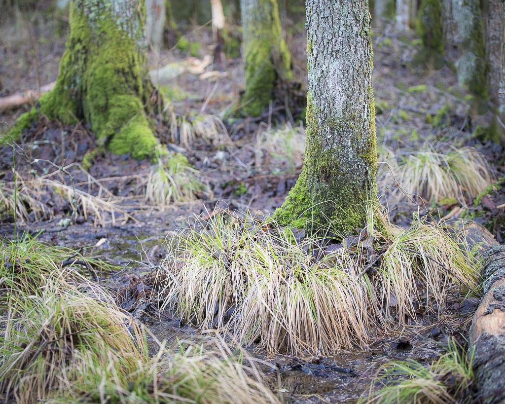 Trädstrumpor