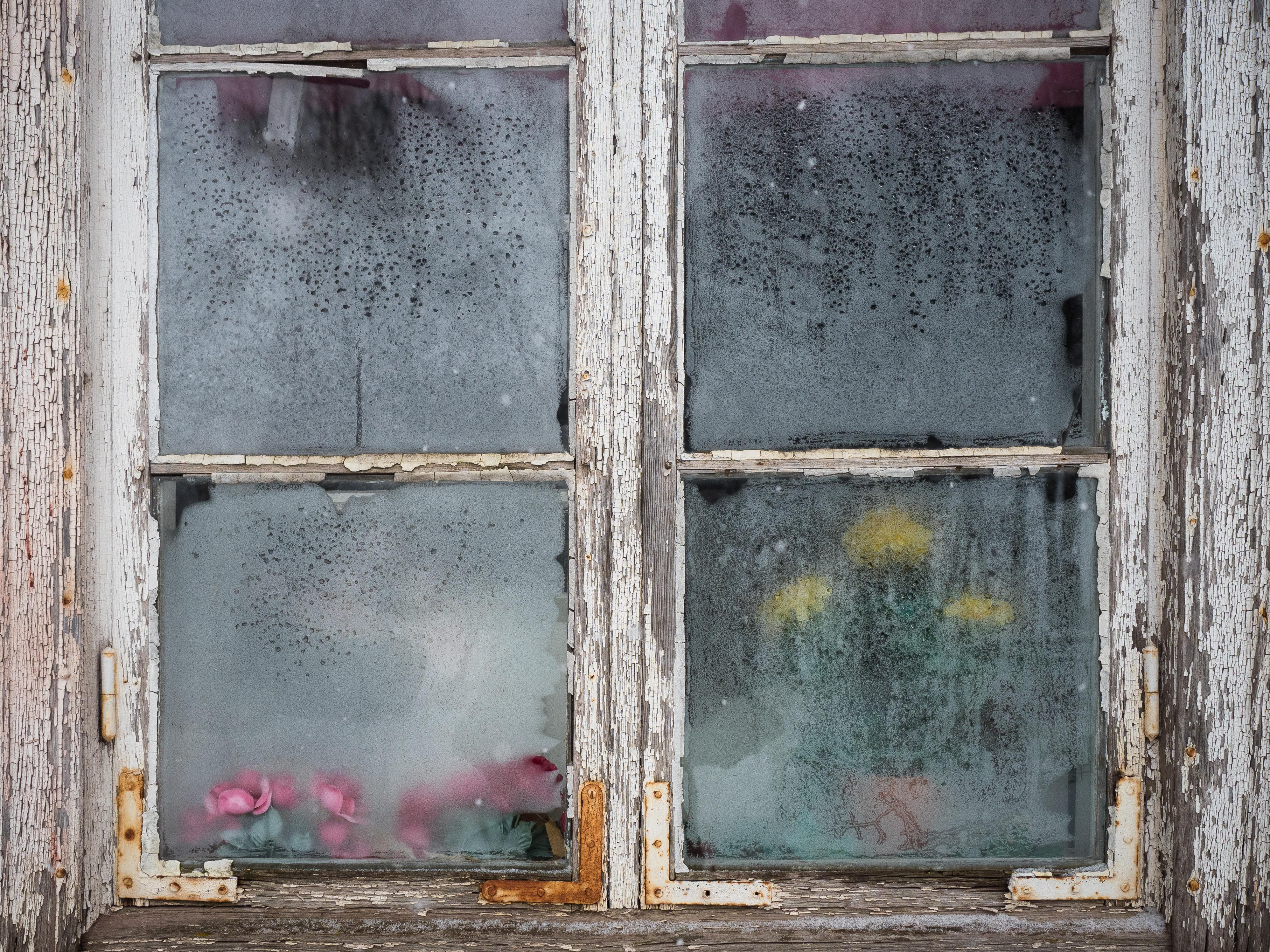 VinterBlommor