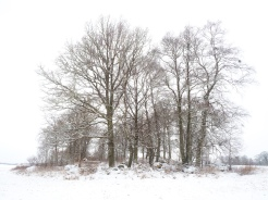 Vinter Dunge