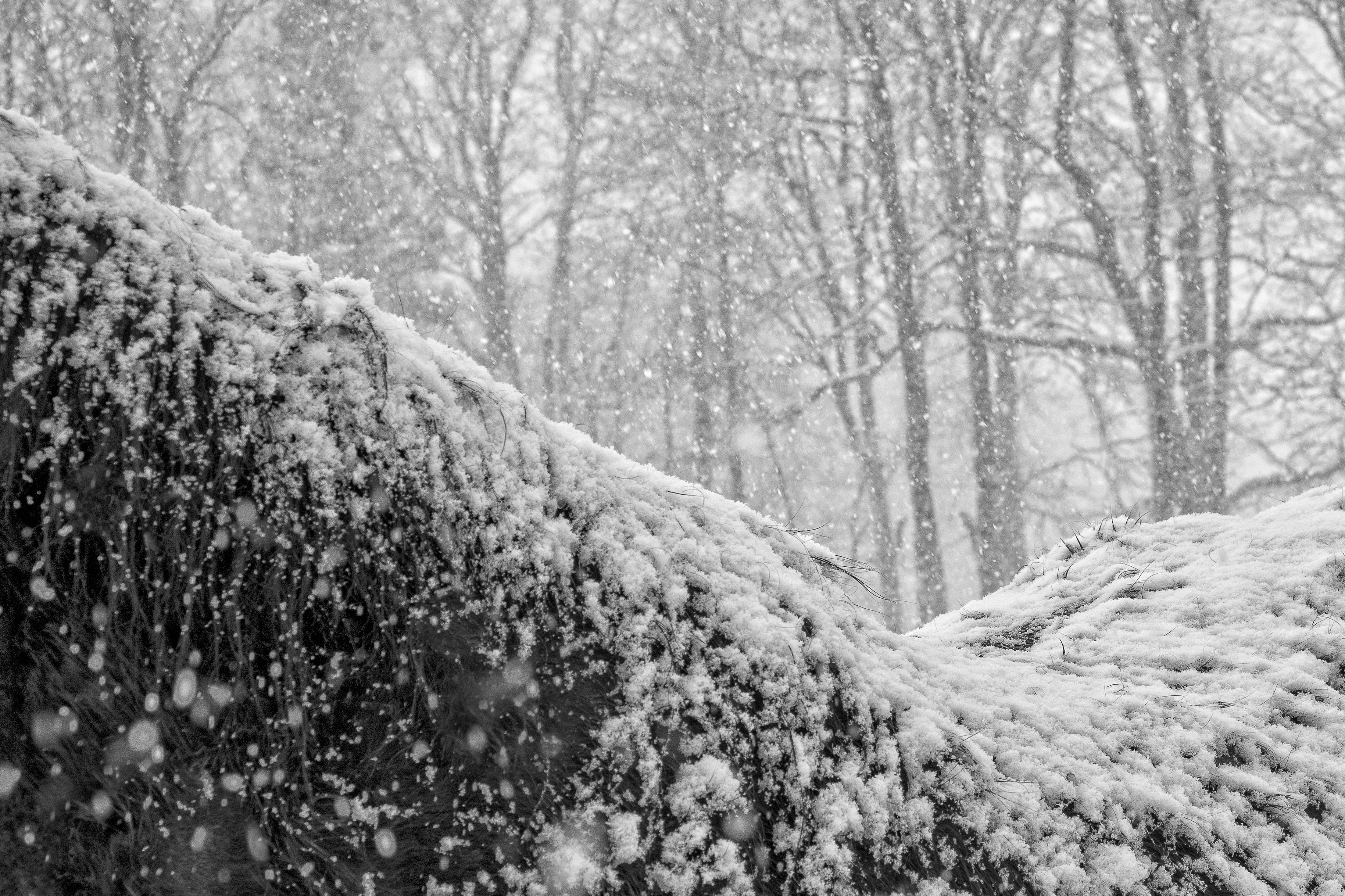 VinterManke