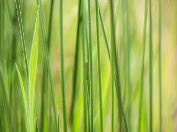 Grass Again