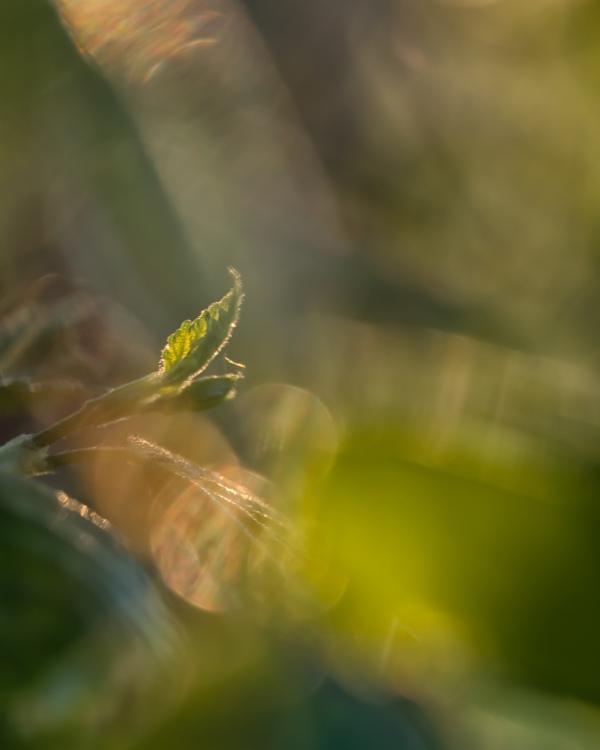 Leafet