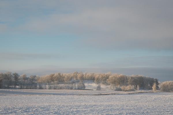vintermorgon-i-november-5334